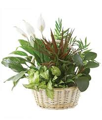 funeral plants classic dish garden at from you flowers