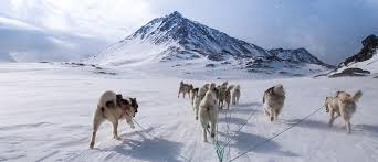 greenland dog sled expedition 47 pirhuk greenland expedition