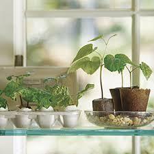 Window Sill Herb Garden Designs Window Sill Herb Garden Ideas Home Intuitive
