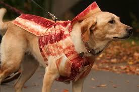Halloween Costume Bacon Bacon Thread Bonanza Imgur Community