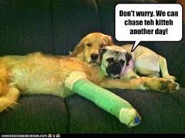 Friends Forever Meme - i has a hotdog friends forever funny dog pictures dog memes