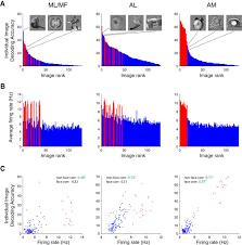 intelligent information loss the coding of identity head