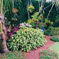 Florida Landscaping Ideas by This Palm Beach County Landscape Features Sanchezia The