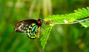 what u0027s the difference between a moth and a butterfly