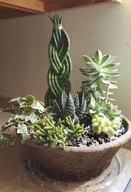 677 best succulents images on pinterest plants gardening