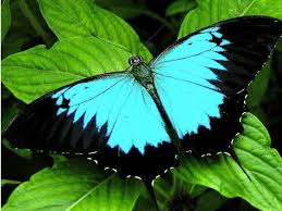 quality hd superb butterflies pics hd wallpapers free