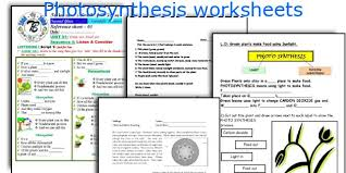 photosynthesis worksheets worksheets