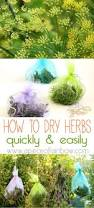 1204 best garden delights herbs u0026 their uses images on pinterest