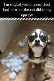 Memes De Chihuahua - 1892 best chihuahua art images on pinterest doggies dogs and