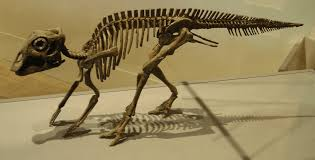 the 10 most important dinosaurs of north america