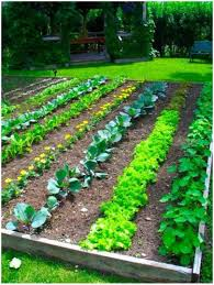 backyard vegetable garden design ideas veggie fantastic for home
