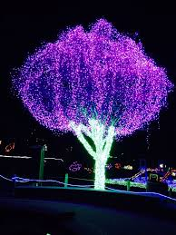 Zoo Lights Tacoma Wa by Point Defiance Get Going