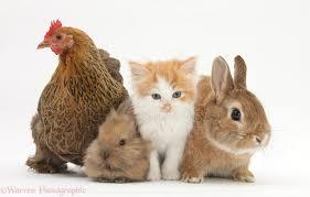 rabbit bunny pets chicken kitten and bunny rabbits photo wp30935