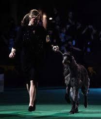 affenpinscher westminster 2015 westminster kennel club dog show natural history