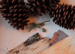 make your own pinecone hedgehogs hgtv