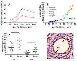 effect of cell shape and packing density on granulosa cell