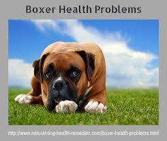 boxer dog vomiting after eating boxerhealthproblems png