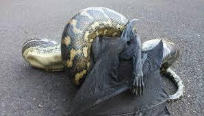 imagenes animales australia 21 fotos que demuestran que australia es el lugar más extraño y