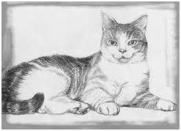 imagenes a lapiz de gatos imágenes de gatos hecho a lápiz para facebook imagen de gatos