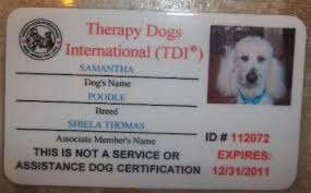 Comfort Dog Certificate Pictures On Certifying A Therapy Dog Pets And Animals Pictures