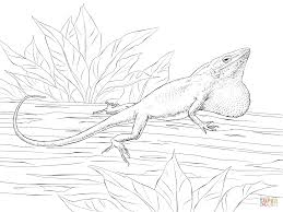 carolina anole coloring page free printable coloring pages