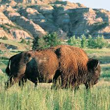 North Dakota wildlife tours images North dakota west lewis clark trail jpg
