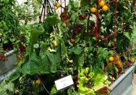 herb gardening for beginners vegetable garden blog and home