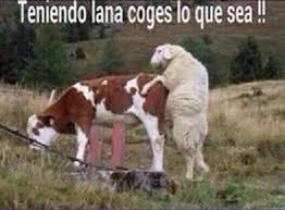 Mexican Meme Jokes - teniendo lana coges lo que sea oct pinterest memes memes