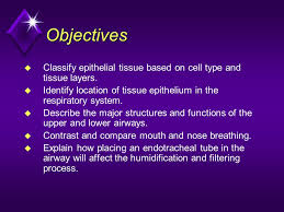 Nose Anatomy And Physiology Module A2 Upper Airway Anatomy U0026 Physiology Ppt Download