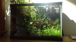 20 gallon high planted tank riparium youtube