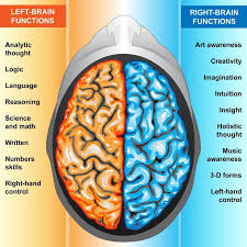 Which Part Of The Brain Consists Of Two Hemispheres A Brief Overview Of The Developing Brain How You Can Help Your