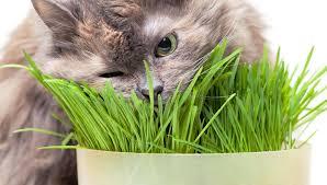 10 toxic plants your cat shouldn u0027t ingest getgardentips com