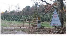 Christmas Tree Farm Va - ralph u0027s christmas trees nelson county