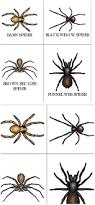 halloween printable cards 146 best homeschool spiders images on pinterest preschool
