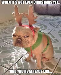 Christmas Dog Meme - when its not even christmas yet and you re already like make
