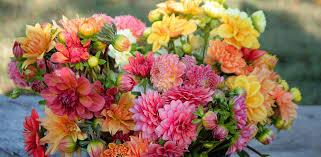 flower farm n fresh flowers