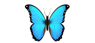 it seems like this blue butterfly emoji is becoming a thing now