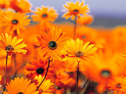 Fall Flowers Beautiful Fall Flowers Great Best Perennial Flowers Sunset With