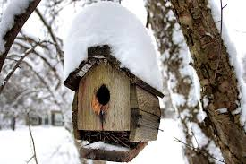 winterize bird houses by turning them into roost boxes