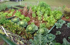 how to start a vegetable garden for beginners beginners guide to starting a vegetable garden the garden