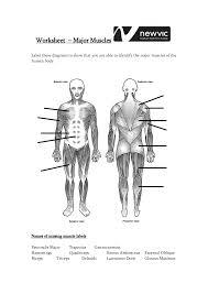 labeling muscles anatomy chart body