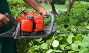shrub removal los angeles shrub removal los angeles ca
