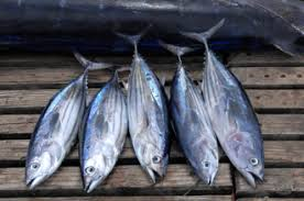mercury in seafood where does it come from grist