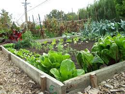 easy backyard vegetable garden ideas homes that turned their front