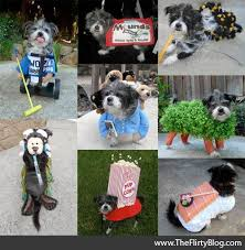 Zombie Dog Halloween Costume 127 Doggy Halloween Images Animals Costumes
