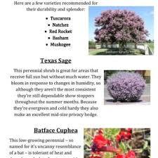 discount trees of brenham 22 photos nurseries gardening