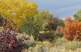 Decorative Shrubs Plants Of The Southwest U2013 Plants Of The Southwest