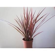 low light house plants low light indoor plants amazon com