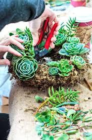174 best succulent gardens u0026 ideas images on pinterest succulent