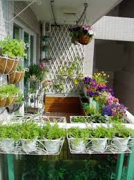 balcony gardening boom triggers demand for liquid fertilizer and